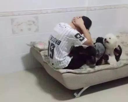 网友让家里4只狗狗帮他压腿做仰卧起坐,没想到下一秒……