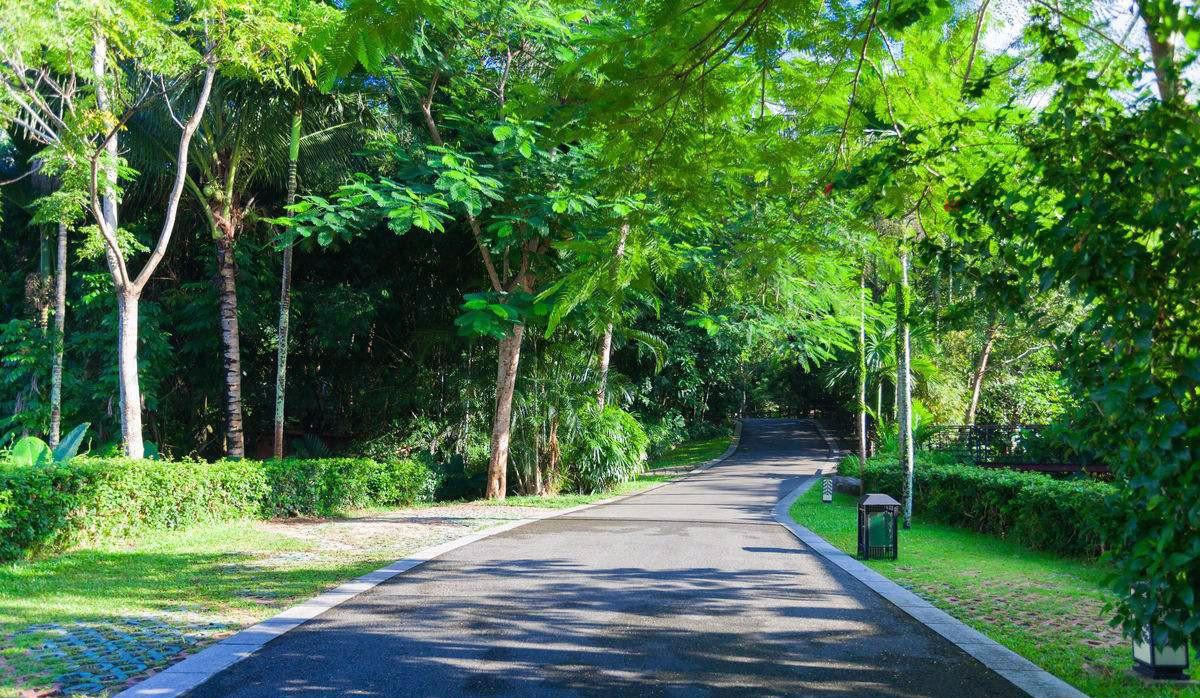 道路篇 道路绿化中,城市干道植物应怎样配置