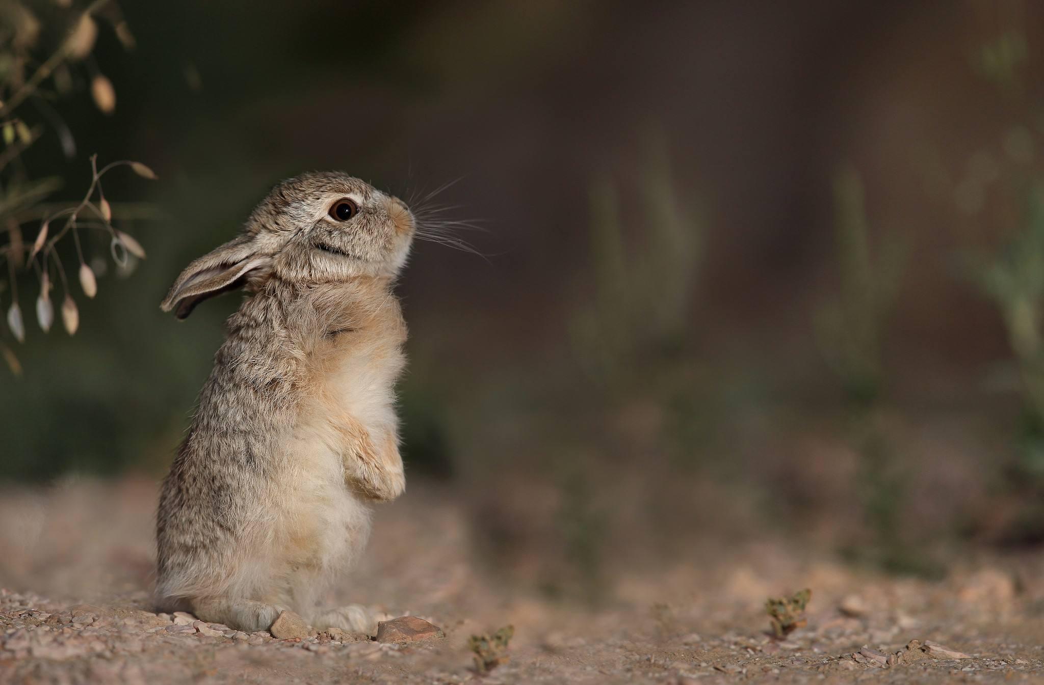 月野兔手机壁纸