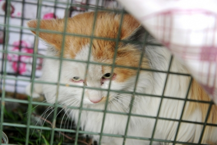 猫咪被困高架桥缝隙_靠老人扔食生存两年