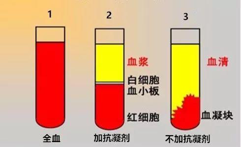 血清 血漿