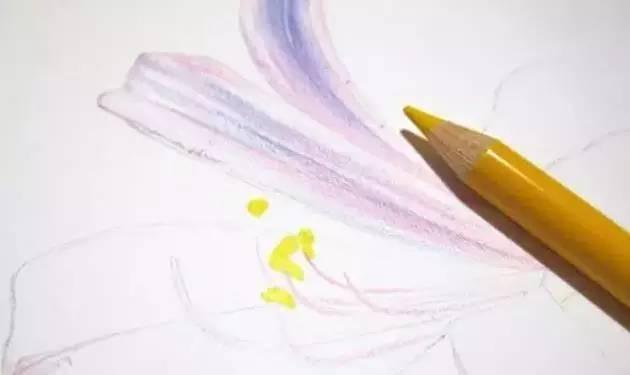 彩铅花卉 画一株彼岸花