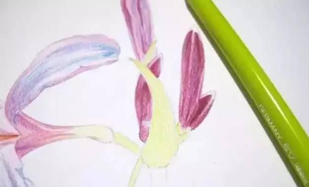 铅花卉 画一株彼岸花
