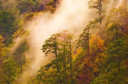 森林康养产业规划