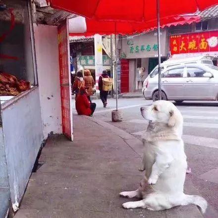 路边看到一只等东西吃的狗子,这坐姿厉害了!