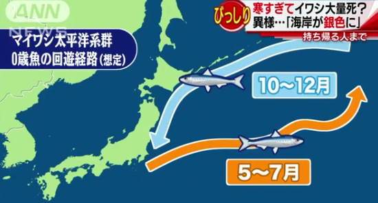 日本海岸出现诡异自然现象:鱼尸体散遍布40公里
