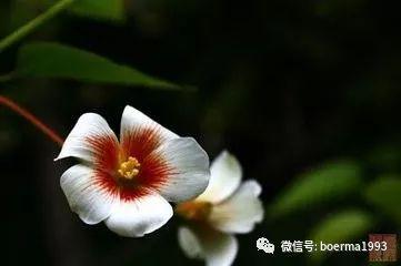 100种花的名称及花语 最全