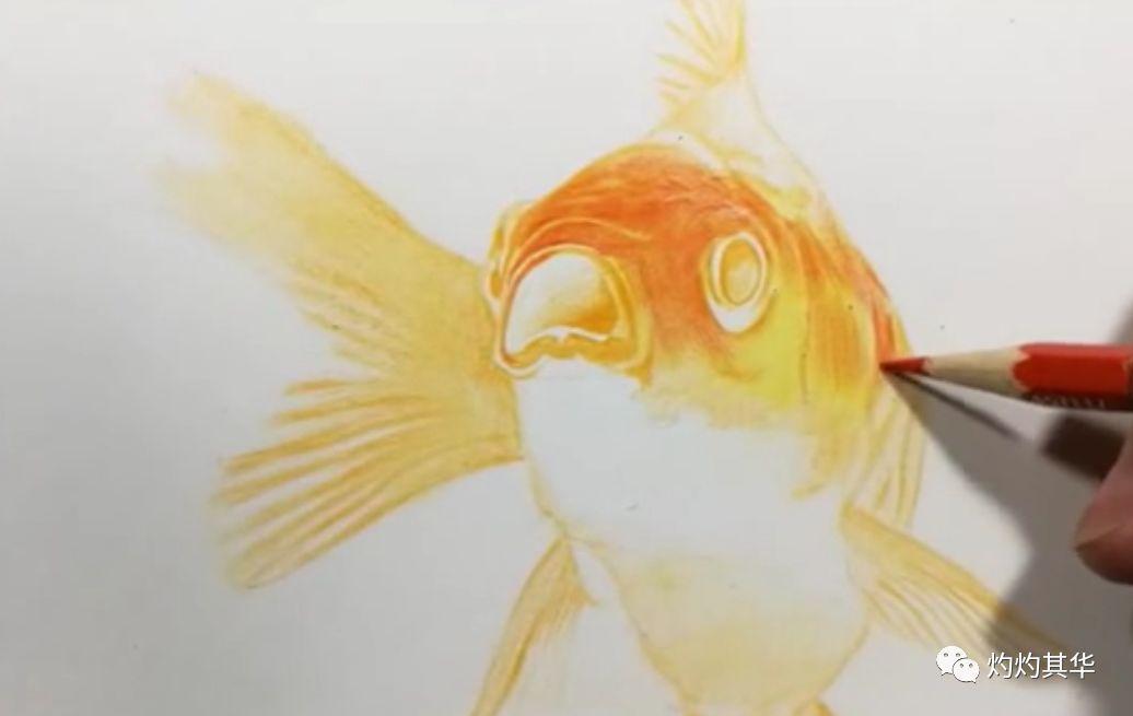 彩铅教程 | 彩铅金鱼