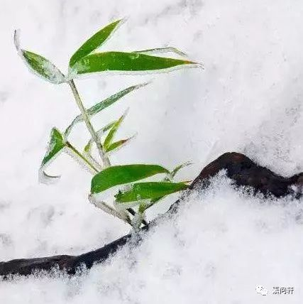 春到人间,草木先知,