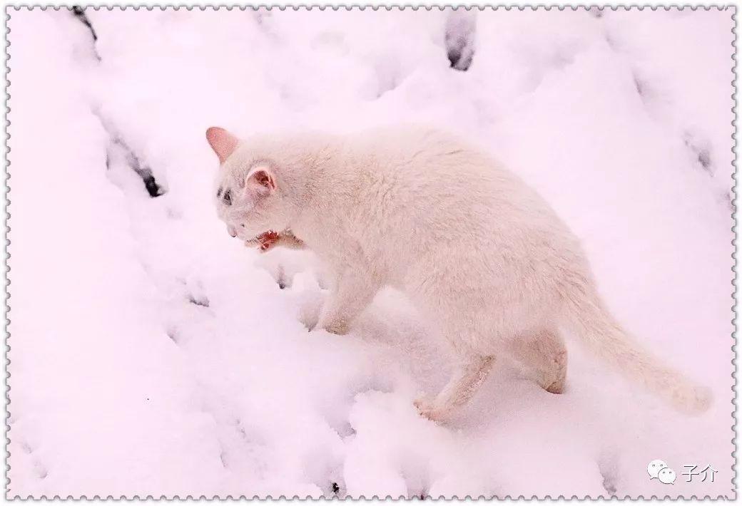 猫咪简单手绘步骤图解