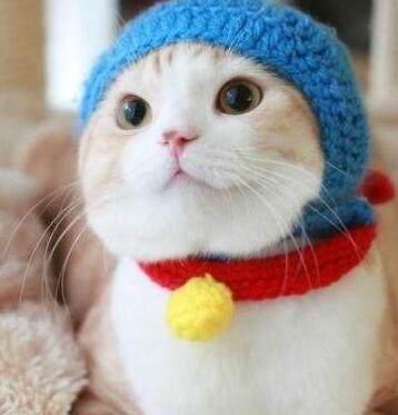 猫咪穿上了衣服,居然这么可爱,让人忍不住想吸猫