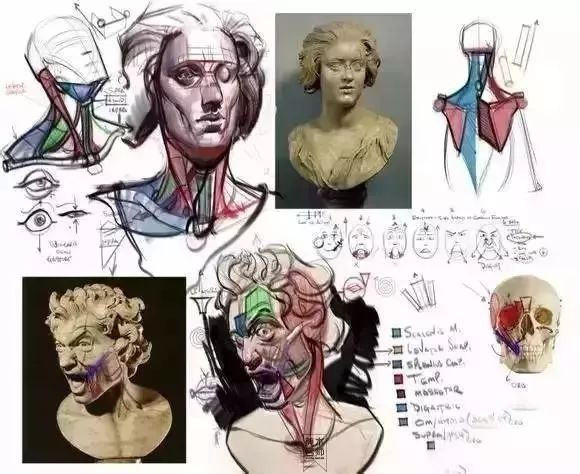 人体的肚子内部结构�_【推荐】史上最全的人体结构素材,只分享一次