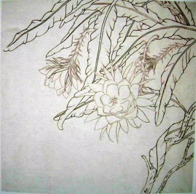 中国工笔花鸟绘画教程—昙花与芭蕉
