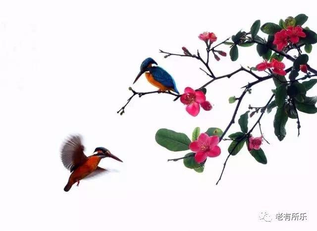 Rose【国家级摄影,养眼养心,美的不只是风景!】(7835) - Rose - Rose Yang的博客