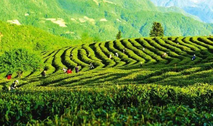 汉中市在江苏南通举行特色农产品暨旅游产品推
