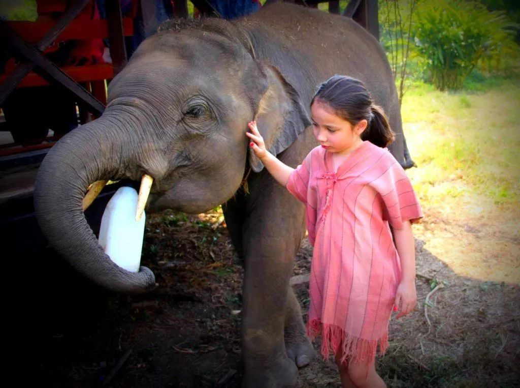 为它去旅行 | 过年想带孩子看世界,不如去这些地方亲近自然和动物!