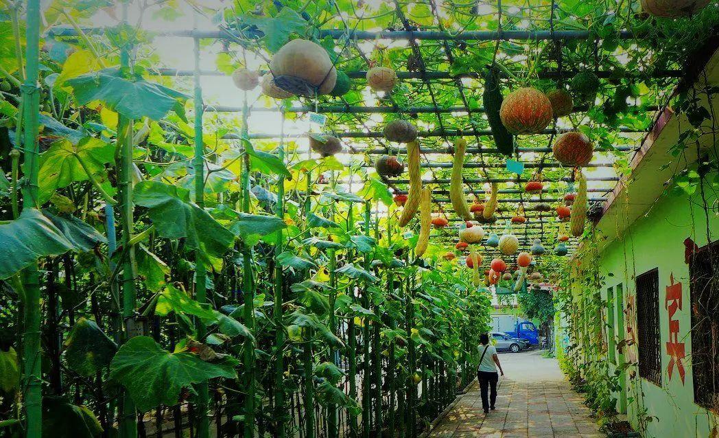 科普教育旅游模式 利用农业观光园,农业科技生态园,农业产品展览馆图片