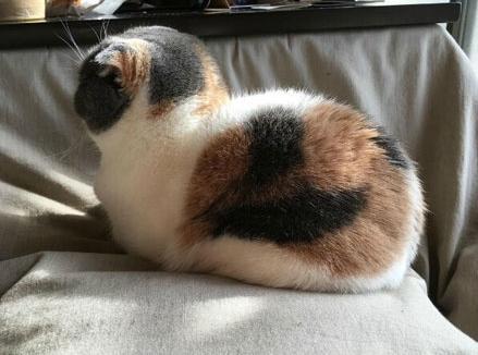 滚圆滚圆的肉球球背影,这哪是猫啊!又拿猪的背影搪塞我是不是?