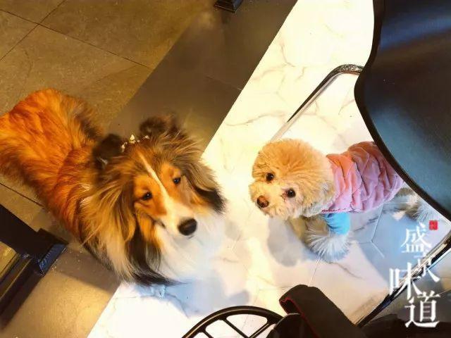 成人三级撸狗网_假日撸狗好去处,超治愈宠物咖啡店给你别样温暖!