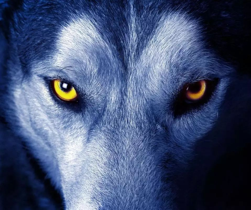 东北狼_人,其实比狼可怕