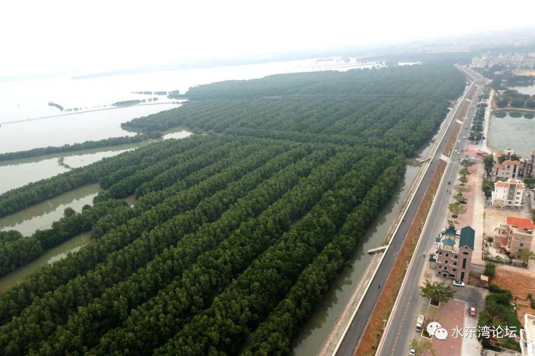 是茂名地区乃至全国出游的目的地的重要选项,特别是水东湾万亩红树林图片