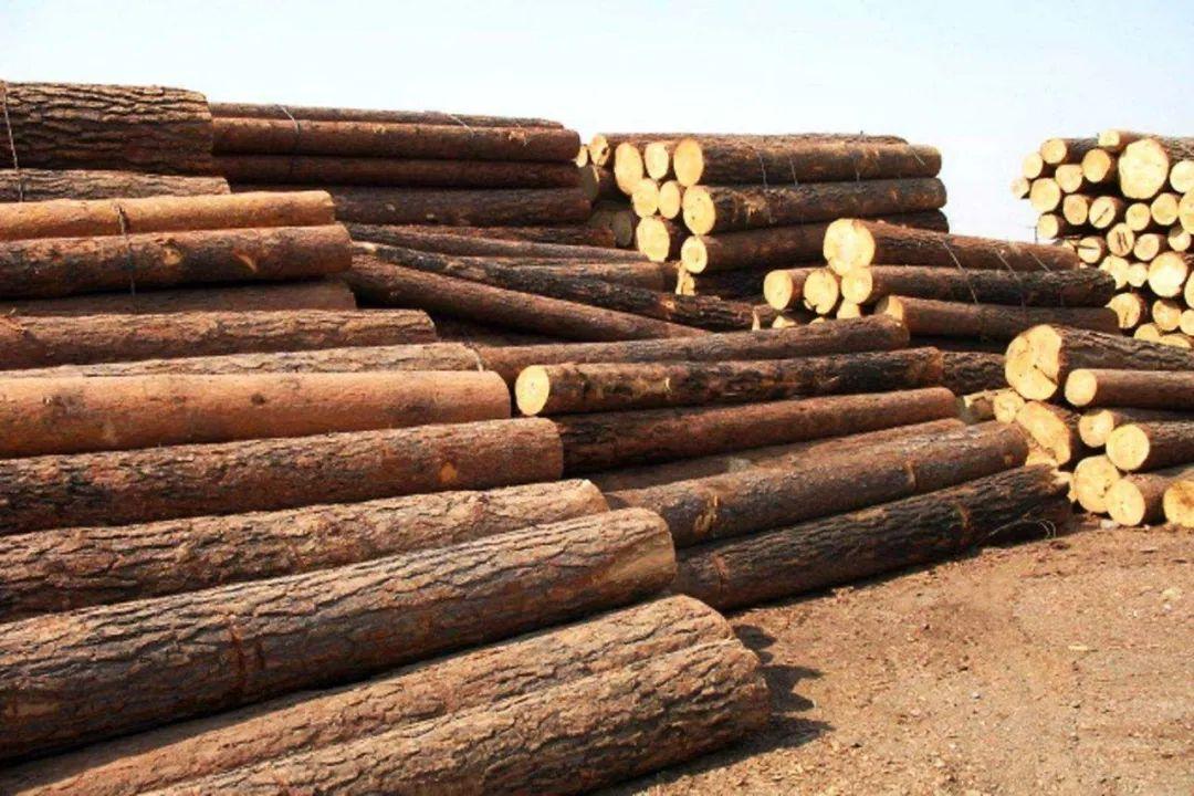 木材是如何检验的你知道吗?我们使用的木制品是否安全呢?