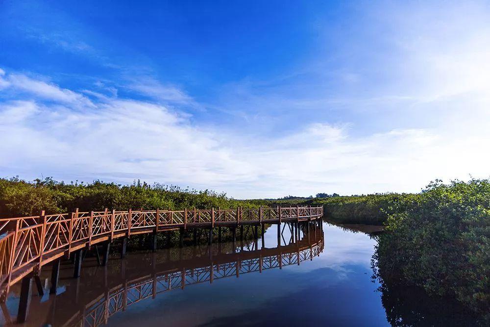【茂名新年新玩法 ,水东湾万亩红树林 十里栈道,生猛图片