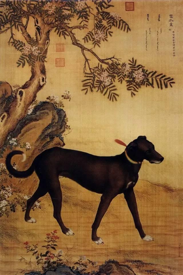 茹.���nz#.{S�;��#��_文化 正文  郎世宁《十骏犬之茹黄豹图》,一般所谓的豹,有花白黑金钱