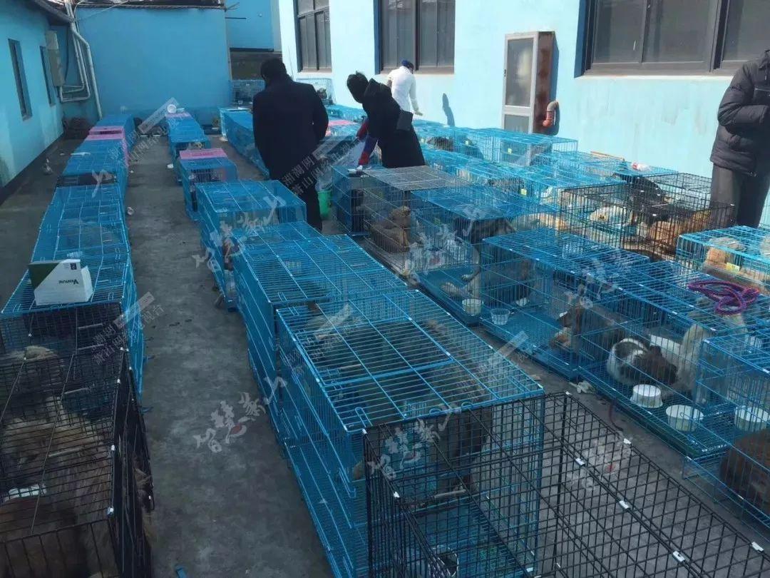 义桥高速拦下的600多条狗安置在围垦,半数以上得了肺炎!还差点上了萧山人的餐桌......