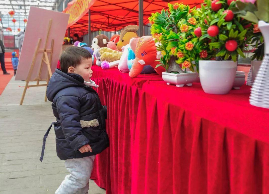连云港这个地方新开了个花鸟市场,趁节前快去逛逛吧