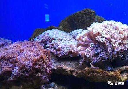 【家门口的海洋世界!】与海洋生物的亲密接触近在咫尺