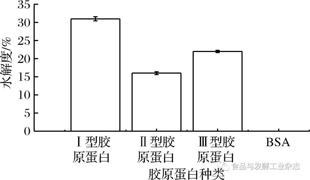 图6 不同蛋白底物对水解度的影响 Fig.6 The influences of different protein substrates on the degree of hydrolysis 图6表明,BSC酶对牛血清白蛋白没有降解作用,而对其他3种类型的胶原蛋白都表现出了降解能力,特别是对I型胶原蛋白的水解度高达31%,显著高于II、III型胶原蛋白的水解度为16%和22%(p<0.