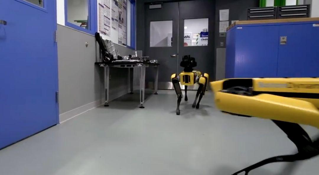 连机器狗也会撒狗粮了。。。