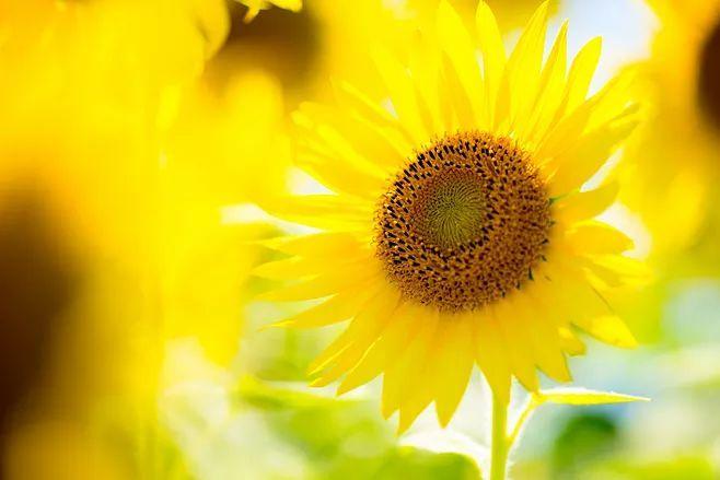 带上自己的阳光,向春天出发