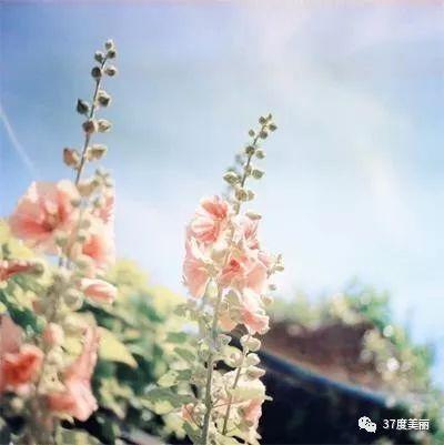 生命中,有风,有雨,但别忘了也会有阳光。