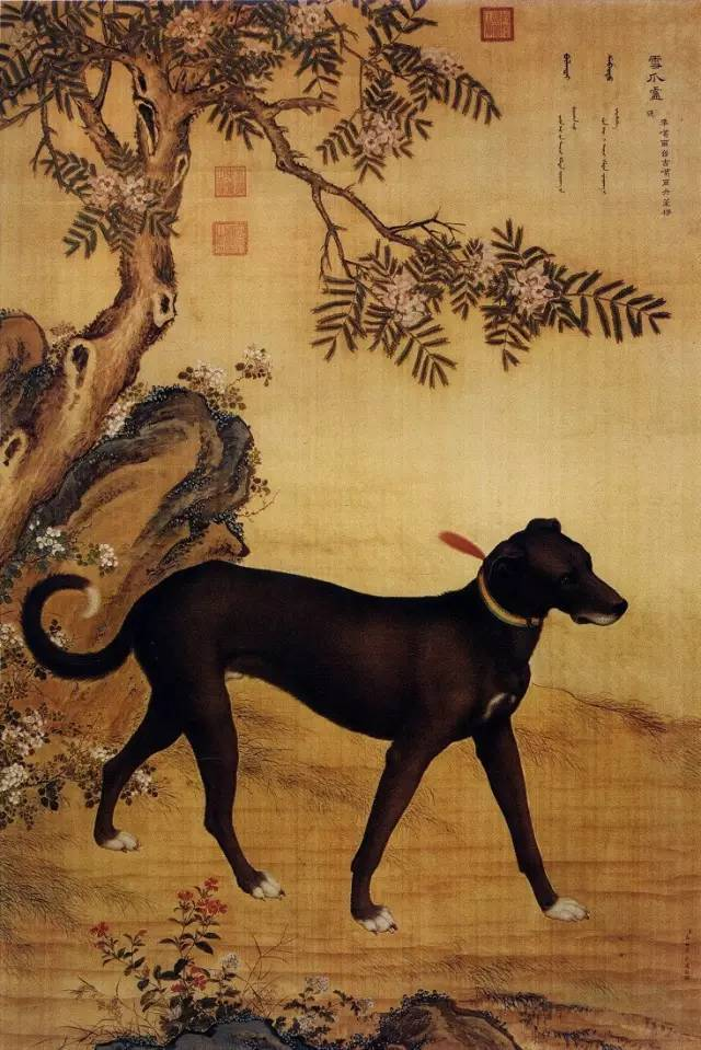 茹.���nz#.{S�;��#��_郎世宁《十骏犬之茹黄豹图》,一般所谓的豹, 有花白黑金钱四种,这只