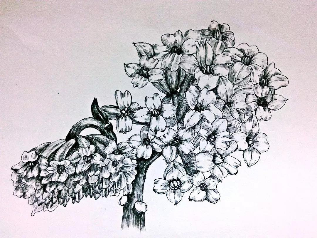 手绘古风梨花图片