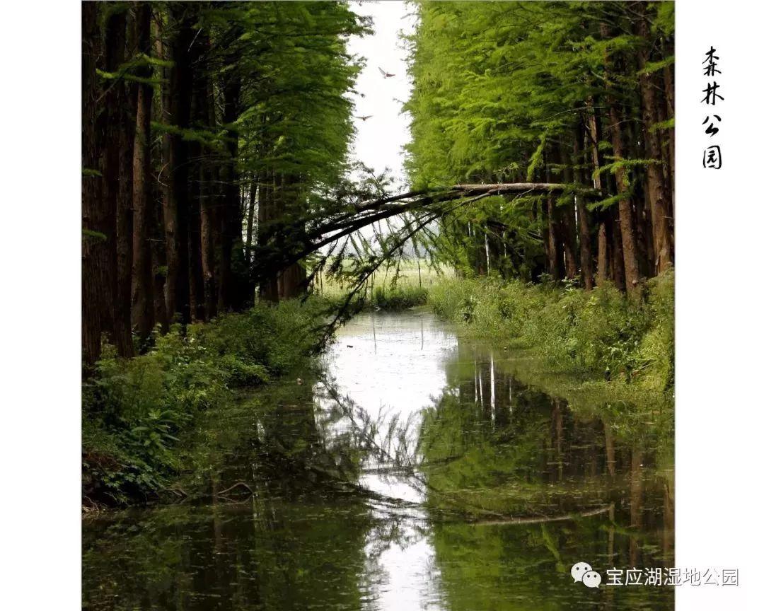 淮安市白马湖湿地公园建设开发有限公司 地址|档案|联... _顺企网