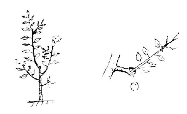 国画 简笔画 手绘 线稿 640_391