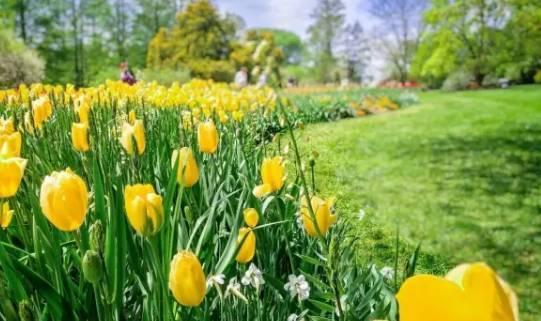 打造一流休闲花卉农业旅游产品