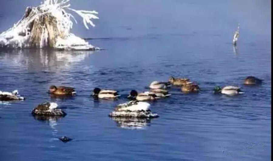 旅游攻略老里克湖位于长白山保护开发区白河镇(原安图县二道白河镇安徽金寨自由行正文图片