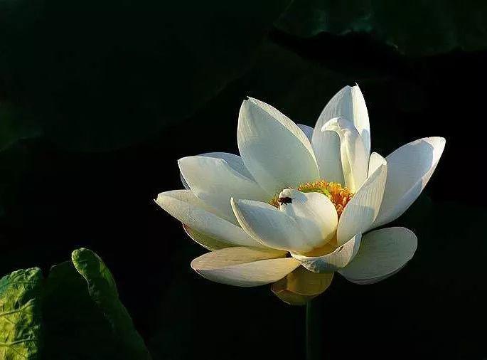 心灵鸡汤   荷花定律、竹子定律、金蝉定律