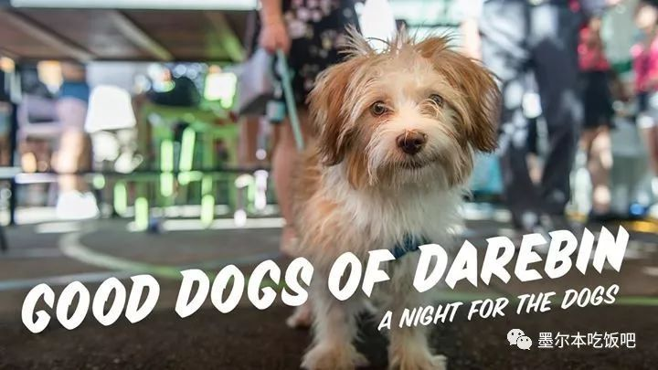 good dogs of darebin 老友狗狗训练同乐日