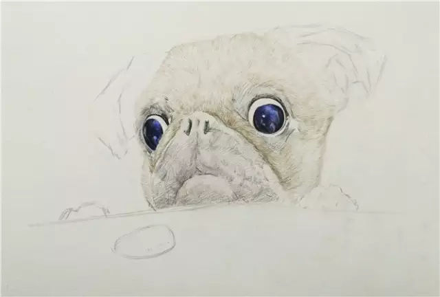 彩铅教程 | 彩铅狗狗的画法,有很多实用技法