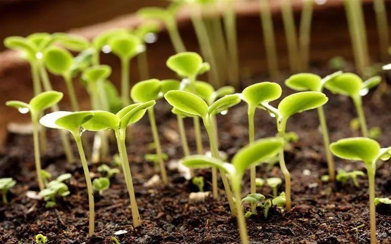 种子发芽需要什么条件