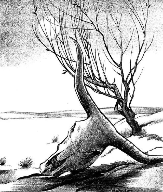 风景素描入门练习 同一棵树的20种不同画法 第36期