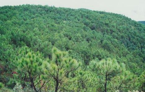 每日一专业之森林工程图片