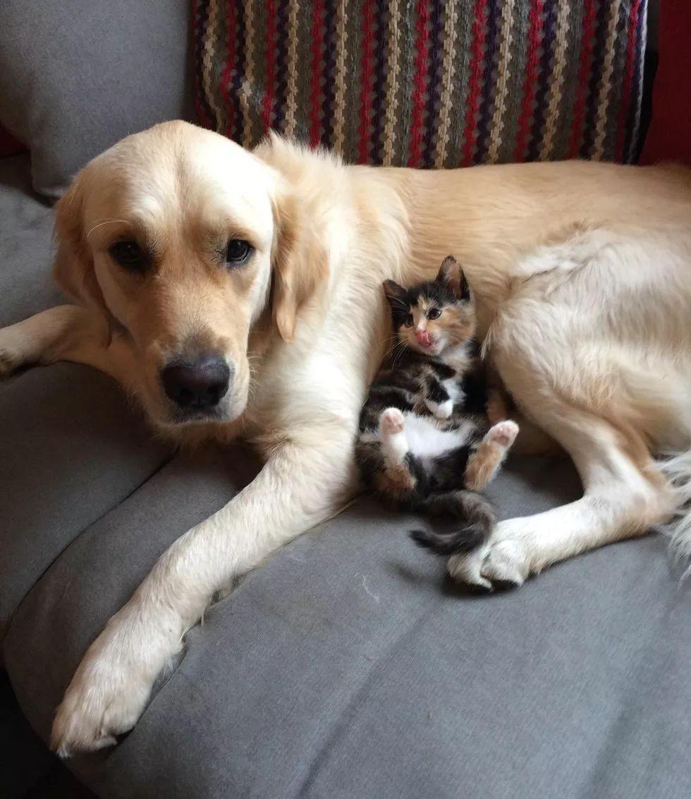 他和她的猫-百科