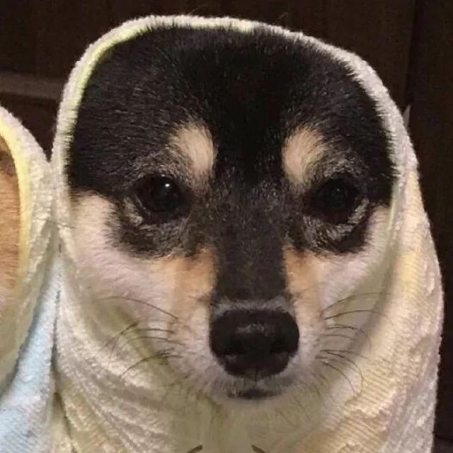 50个虐死单身狗的情侣头像,今年你脱单了吗?