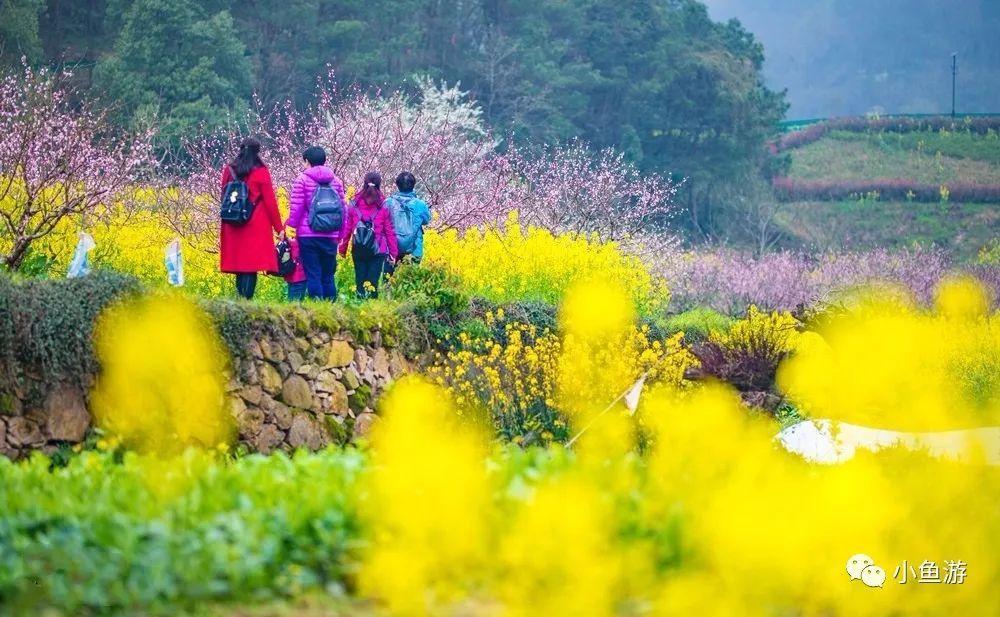 不输江西婺源!黄石有一个古村,梨花、桃花、油菜花即将成海!